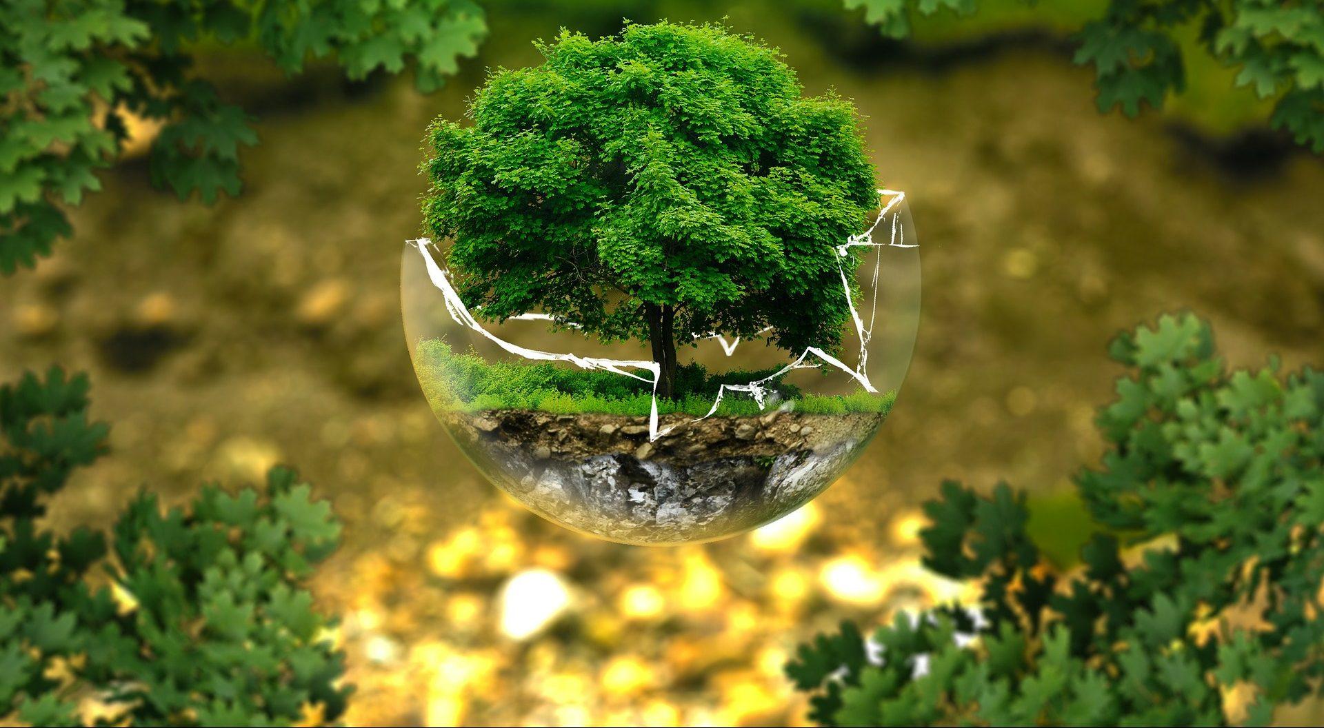 Gepflanzt: Die Aktie der Megatrends? VEOLIA ENVIRONNEMENT